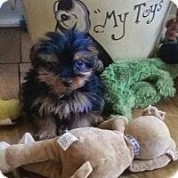 Adopt A Pet :: Ivy - West Palm Beach, FL