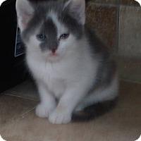 Adopt A Pet :: LUKA - Acme, PA