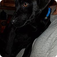Adopt A Pet :: Rudi - Charlestown, RI