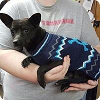 Adopt A Pet :: Gunner - Livingston, TX