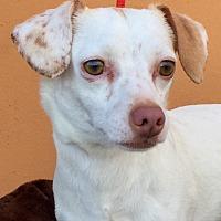 Adopt A Pet :: Grant - Santa Ana, CA