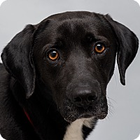 Adopt A Pet :: Toby - Westfield, NY
