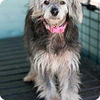 Adopt A Pet :: Sarah - Roanoke, VA