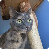 Adopt A Pet :: Mia - Northfield, MN