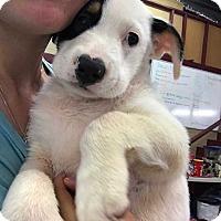 Adopt A Pet :: Larry - Mooresville, NC