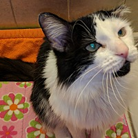 Adopt A Pet :: Podrick - Toronto, ON