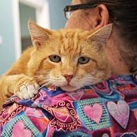 Adopt A Pet :: Buddy - Paris, ME