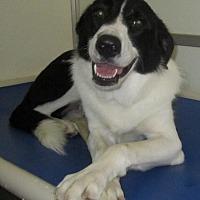 Adopt A Pet :: Jewel - Holton, KS