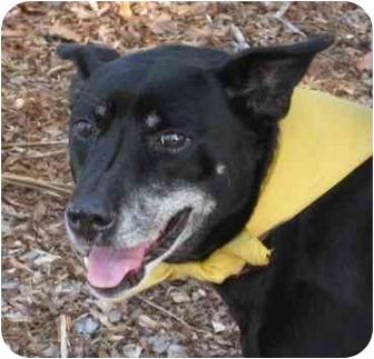 Shepherd (Unknown Type) Mix Dog for adoption in San Diego, California - Holly