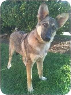 German Shepherd Dog Mix Dog for adoption in Santa Monica, California - WILLOW
