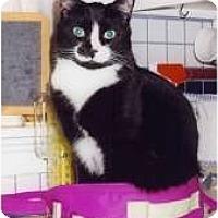 Adopt A Pet :: Emerson - Riverside, RI