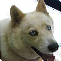 Adopt A Pet :: Nikko - Conyers, GA