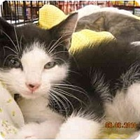 Adopt A Pet :: Shama - Riverside, RI