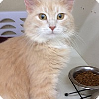 Adopt A Pet :: Riviera - Troy, OH