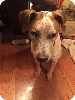 Redtick Coonhound/Catahoula Leopard Dog Mix Puppy for adoption in Atlanta, Georgia - Duke (and Daisy)
