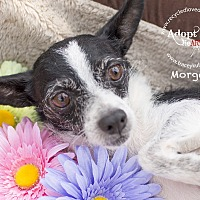 Adopt A Pet :: MORGAN - Inland Empire, CA