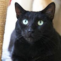 Adopt A Pet :: Alexandria - Columbus, OH
