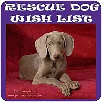 Adopt A Pet :: LVWCR WISHLIST - Las Vegas, NV