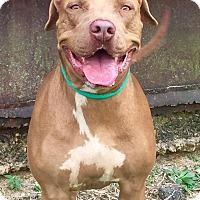 Adopt A Pet :: Kate - Demopolis, AL