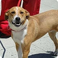 Adopt A Pet :: Oliver - Elmsford, NY