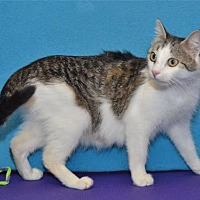 Adopt A Pet :: Piper - Lenexa, KS