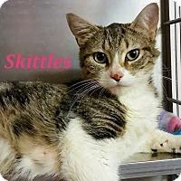 Adopt A Pet :: Skittles - El Cajon, CA
