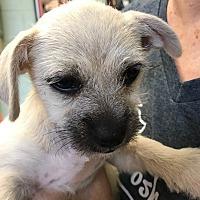 Adopt A Pet :: Jameson - Long Beach, NY