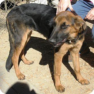Shepherd (Unknown Type) Mix Dog for adoption in San Diego, California - Dancer URGENT