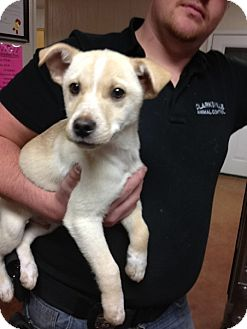 Terrier (Unknown Type, Small) Mix Puppy for adoption in East Hartford, Connecticut - Nick adoption pending