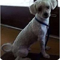 Adopt A Pet :: Phillip - Plainfield, CT