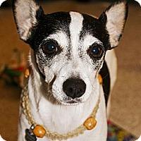 Adopt A Pet :: BArklry - North Palm Beach, FL