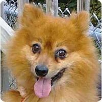 Adopt A Pet :: Rusty - Gum Spring, VA