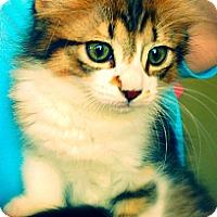 Adopt A Pet :: Haddie Mae - Green Bay, WI