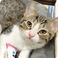 Adopt A Pet :: BETHANY - Diamond Bar, CA