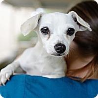 Adopt A Pet :: Jaina - Mission Viejo, CA