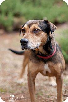 Terrier (Unknown Type, Medium)/Shepherd (Unknown Type) Mix Dog for adoption in Wilmington, Delaware - Serena