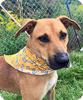 Shepherd (Unknown Type) Mix Dog for adoption in Flint, Michigan - Duncan - Rescued