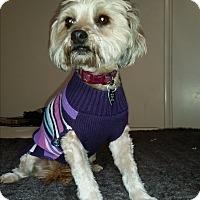 Adopt A Pet :: Ruby - Burbank, CA