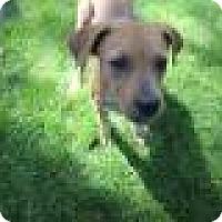Adopt A Pet :: Rayna - Minneapolis, MN