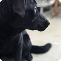 Adopt A Pet :: Coolio - Lewisburg, TN