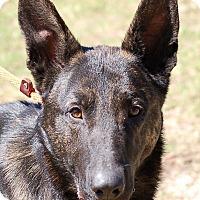Adopt A Pet :: Hertz AD 06-03-17 - Preston, CT