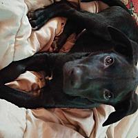 Adopt A Pet :: Zeke - Homer, NY