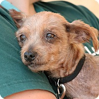 Adopt A Pet :: Ginger - Palmdale, CA