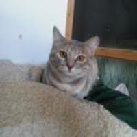 Adopt A Pet :: Willow (adult) - Garland, TX