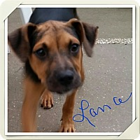 Adopt A Pet :: Lance - Weeki Wachee, FL