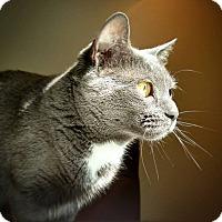 Adopt A Pet :: Jasmine - Winchendon, MA