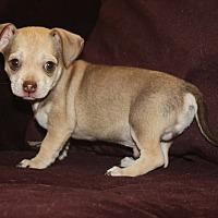 Adopt A Pet :: Dougie - Henderson, NV
