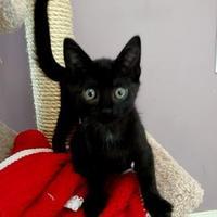 Adopt A Pet :: Guac - Janesville, WI