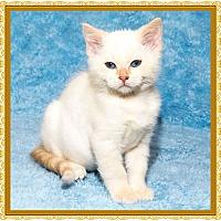 Adopt A Pet :: Cherry Pie - Mt. Prospect, IL