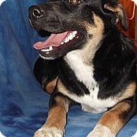 Adopt A Pet :: Skittles - Hendersonville, TN